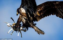 EagleDrone