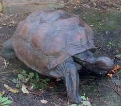 Dad's tortoise