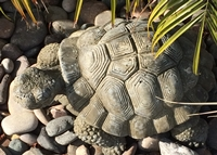 neighbor tortise